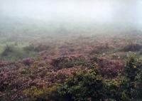 nebel5.jpg