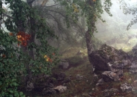 nebel6.jpg